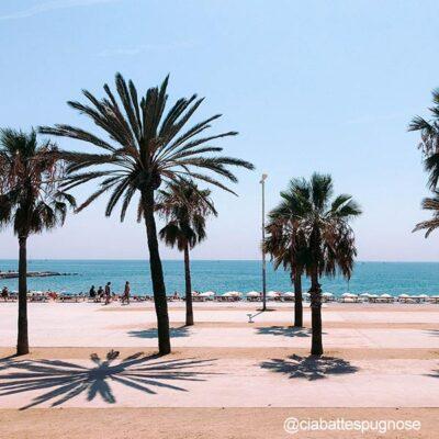 Palmeras en las playas de Barcelona